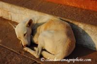 Sleep (Varanasi) India